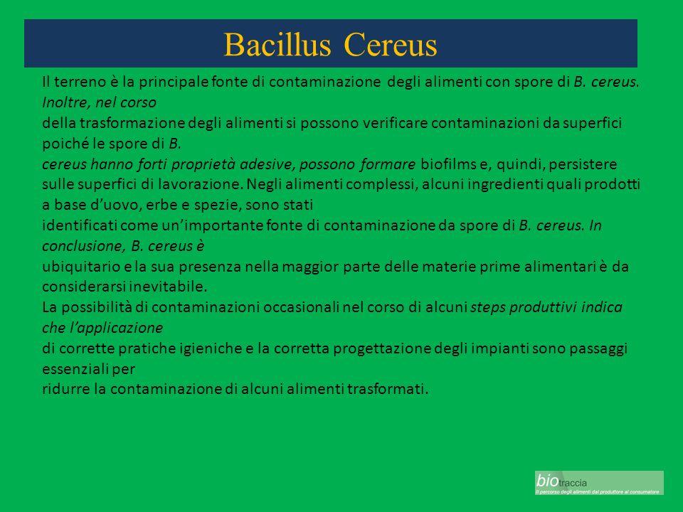 Bacillus Cereus Il terreno è la principale fonte di contaminazione degli alimenti con spore di B. cereus. Inoltre, nel corso della trasformazione degl
