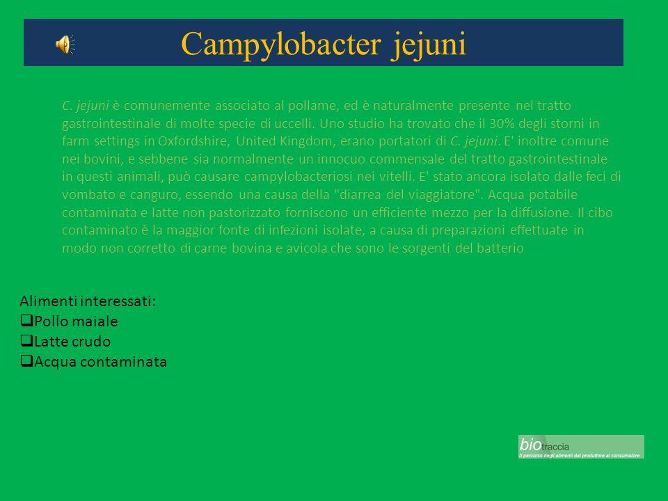 Campylobacter jejuni Alimenti interessati: Pollo maiale Latte crudo Acqua contaminata C. jejuni è comunemente associato al pollame, ed è naturalmente