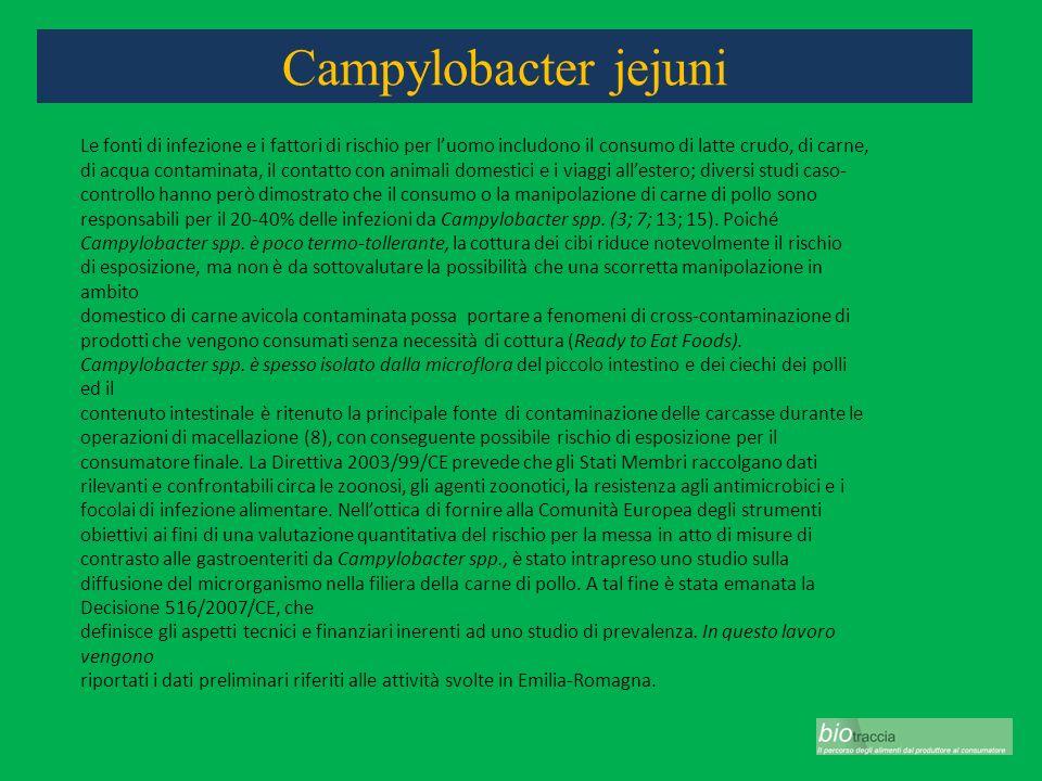 Campylobacter jejuni Le fonti di infezione e i fattori di rischio per luomo includono il consumo di latte crudo, di carne, di acqua contaminata, il co