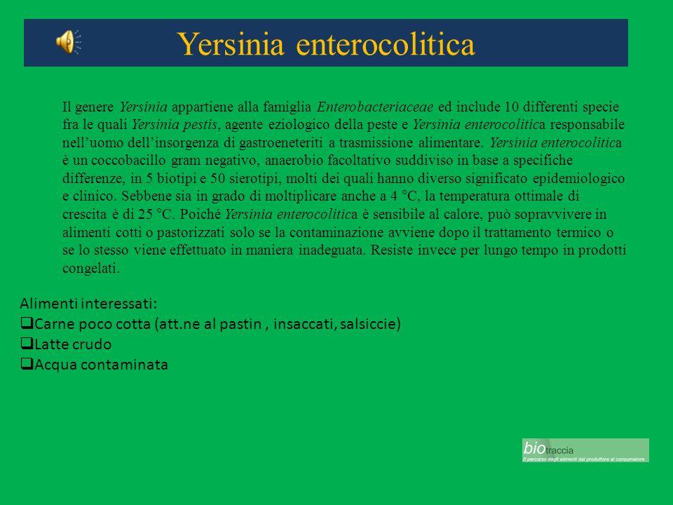 Yersinia enterocolitica Alimenti interessati: Carne poco cotta (att.ne al pastin, insaccati, salsiccie) Latte crudo Acqua contaminata Il genere Yersin