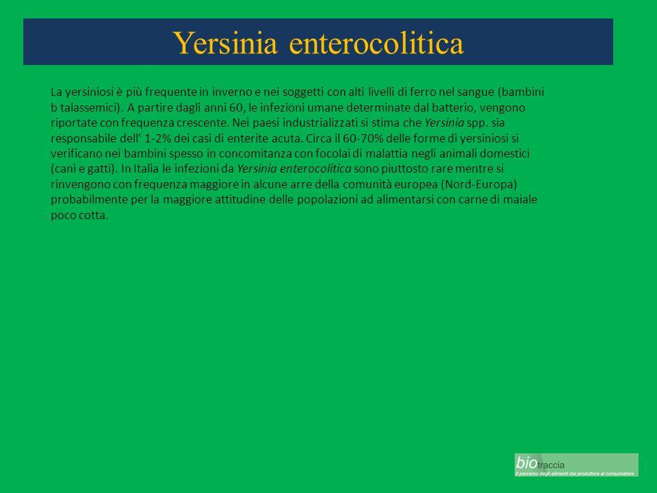 Yersinia enterocolitica La yersiniosi è più frequente in inverno e nei soggetti con alti livelli di ferro nel sangue (bambini b talassemici). A partir