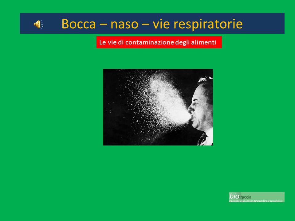 Bocca – naso – vie respiratorie Le vie di contaminazione degli alimenti