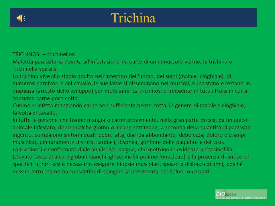 Trichina TRICHINOSI – trichinellosi Malattia parassitaria dovuta allinfestazione da parte di un minuscolo verme, la trichina o Trichinella spiralis. L