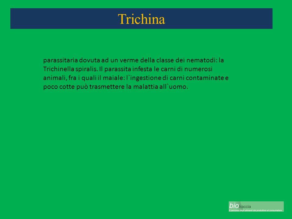 Trichina parassitaria dovuta ad un verme della classe dei nematodi: la Trichinella spiralis. Il parassita infesta le carni di numerosi animali, fra i