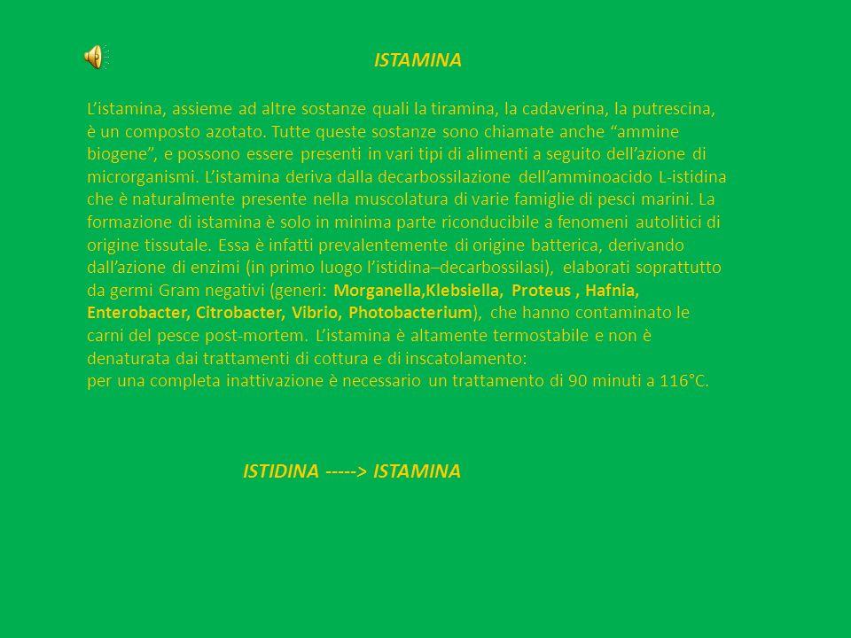 ISTAMINA Listamina, assieme ad altre sostanze quali la tiramina, la cadaverina, la putrescina, è un composto azotato. Tutte queste sostanze sono chiam