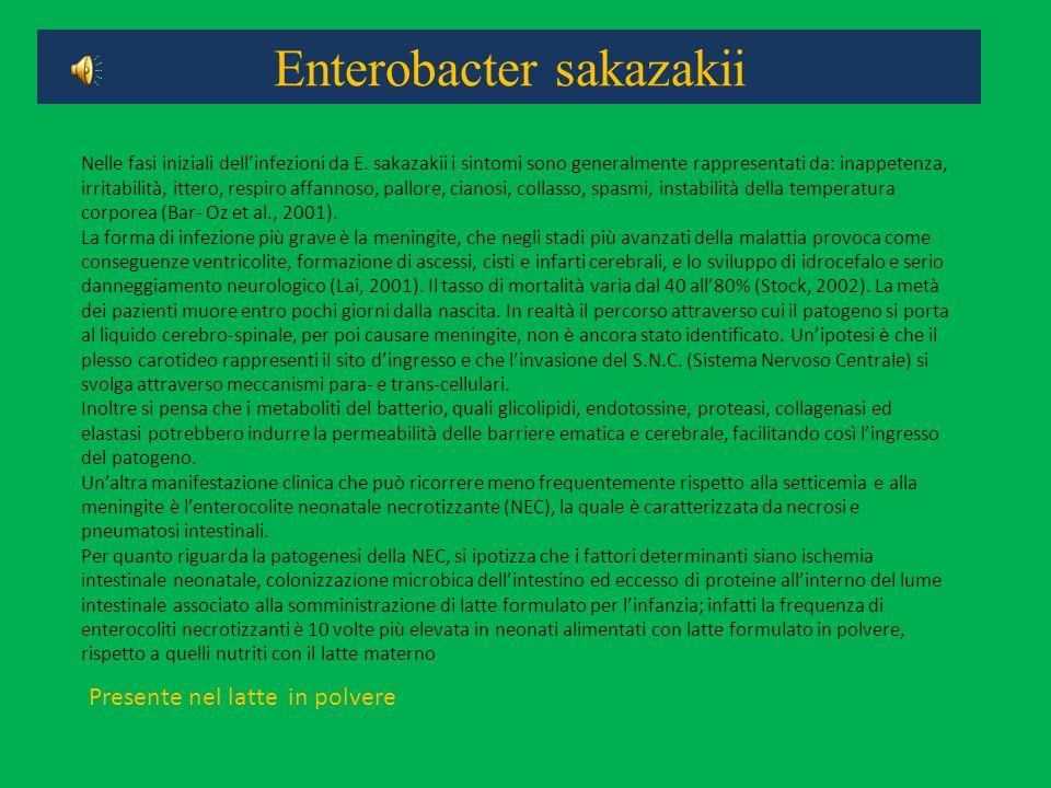 Enterobacter sakazakii Nelle fasi iniziali dellinfezioni da E. sakazakii i sintomi sono generalmente rappresentati da: inappetenza, irritabilità, itte