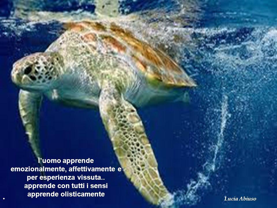 luomo apprende emozionalmente, affettivamente e per esperienza vissuta.. apprende con tutti i sensi apprende olisticamente Lucia Abiuso
