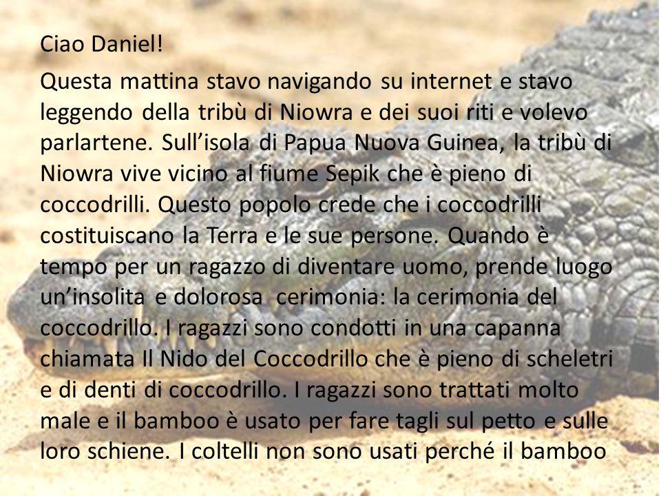 Ciao Daniel! Questa mattina stavo navigando su internet e stavo leggendo della tribù di Niowra e dei suoi riti e volevo parlartene. Sullisola di Papua