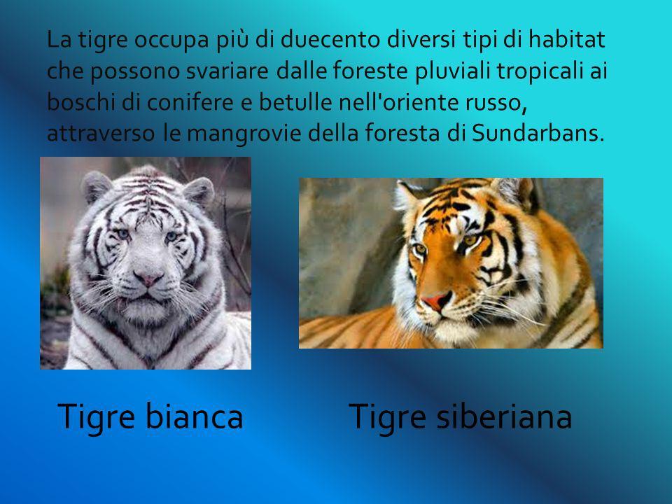 La tigre occupa più di duecento diversi tipi di habitat che possono svariare dalle foreste pluviali tropicali ai boschi di conifere e betulle nell'ori