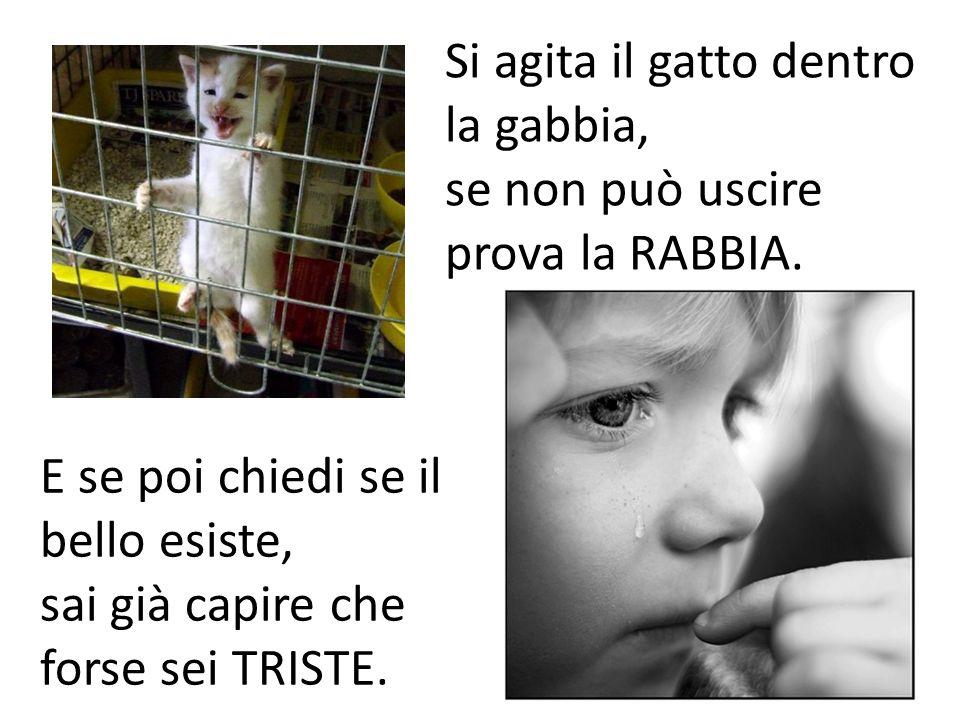 Si agita il gatto dentro la gabbia, se non può uscire prova la RABBIA. E se poi chiedi se il bello esiste, sai già capire che forse sei TRISTE.