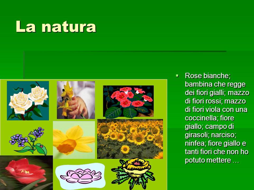 La natura Rose bianche; bambina che regge dei fiori gialli; mazzo di fiori rossi; mazzo di fiori viola con una coccinella; fiore giallo; campo di gira