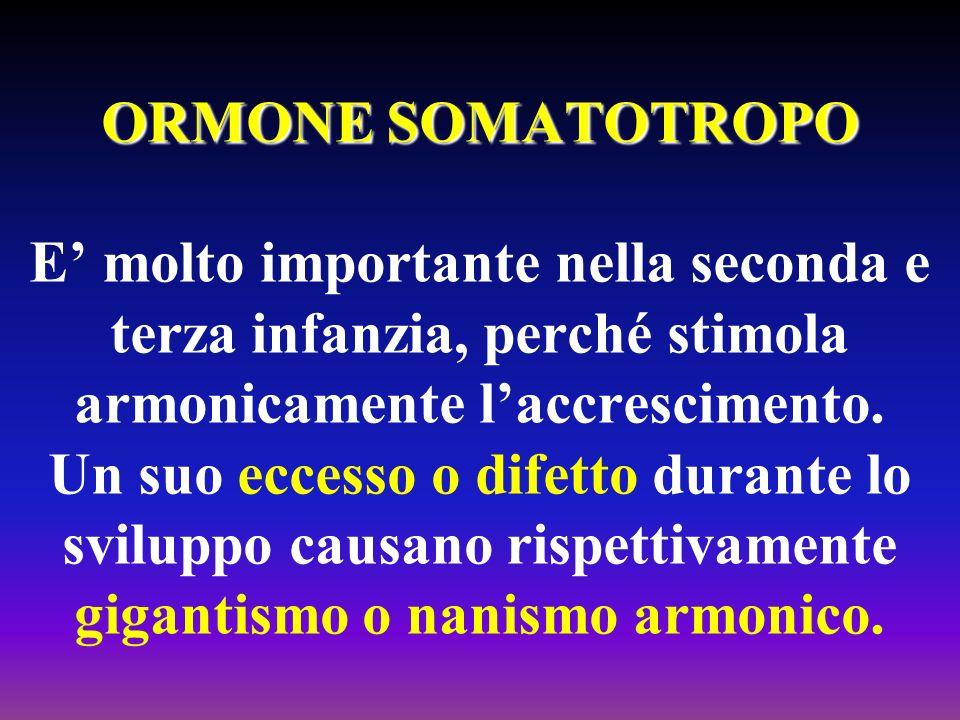 ORMONE SOMATOTROPO ORMONE SOMATOTROPO E molto importante nella seconda e terza infanzia, perché stimola armonicamente laccrescimento. Un suo eccesso o