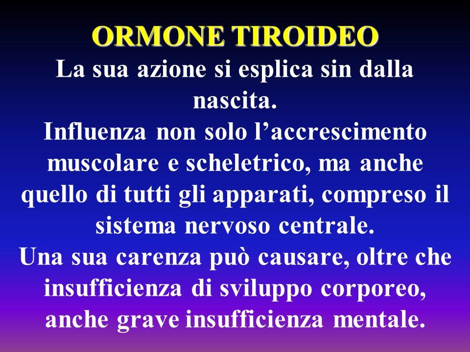 ORMONE TIROIDEO ORMONE TIROIDEO La sua azione si esplica sin dalla nascita. Influenza non solo laccrescimento muscolare e scheletrico, ma anche quello