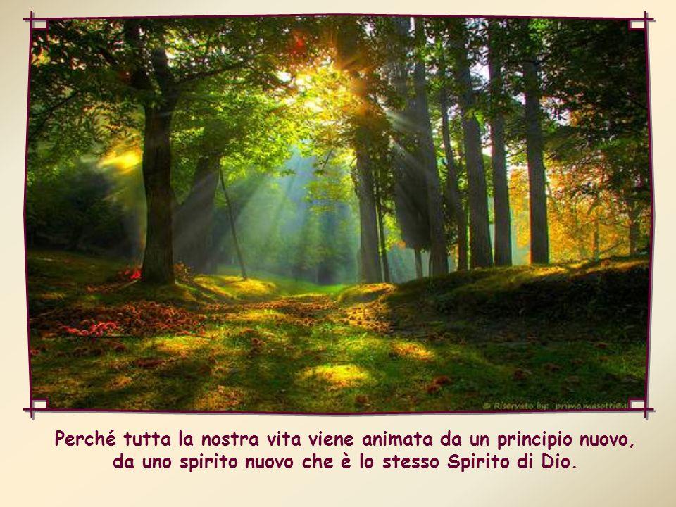 Dobbiamo anzitutto renderci sempre più coscienti della presenza dello Spirito Santo in noi: portiamo nel nostro intimo un tesoro immenso; ma non ce ne rendiamo abbastanza conto.