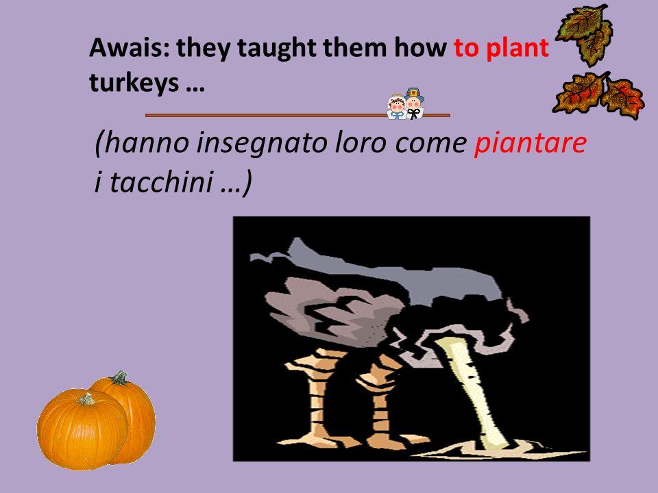 Awais: they taught them how to plant turkeys … (hanno insegnato loro come piantare i tacchini …)