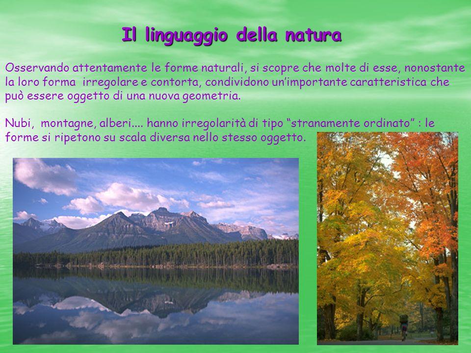Il linguaggio della natura Osservando attentamente le forme naturali, si scopre che molte di esse, nonostante la loro forma irregolare e contorta, con