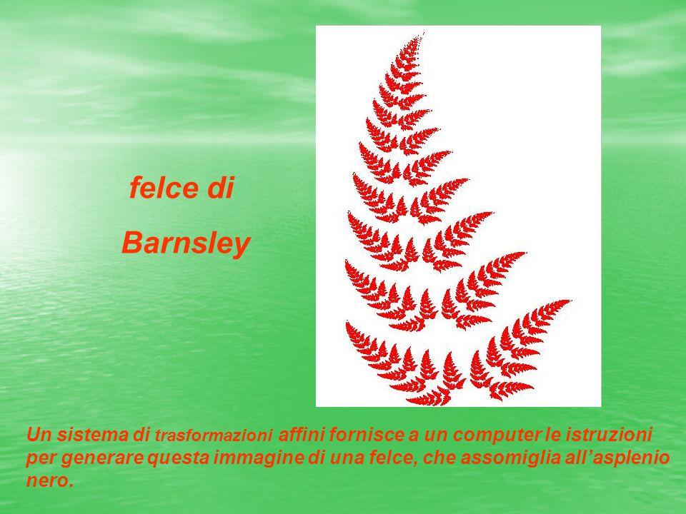 felce di Barnsley Un sistema di trasformazioni affini fornisce a un computer le istruzioni per generare questa immagine di una felce, che assomiglia a