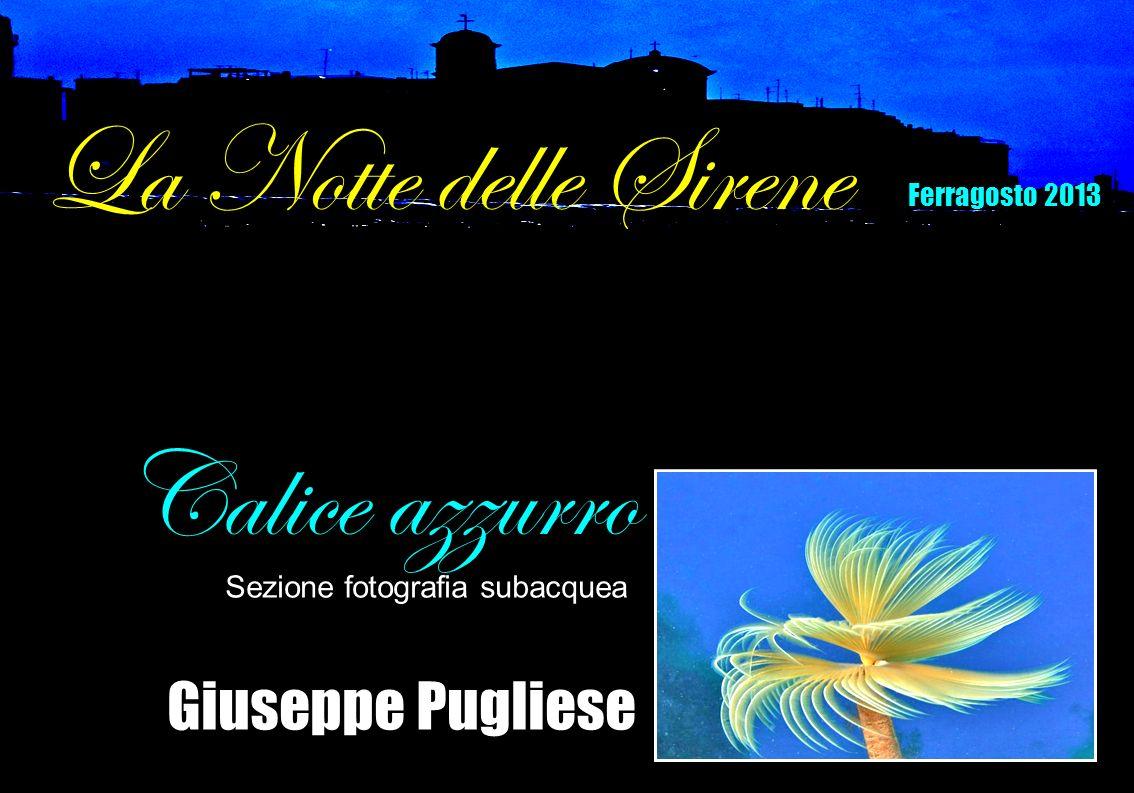 Giuseppe Pugliese Calice azzurro Sezione fotografia subacquea La Notte delle Sirene Ferragosto 2013