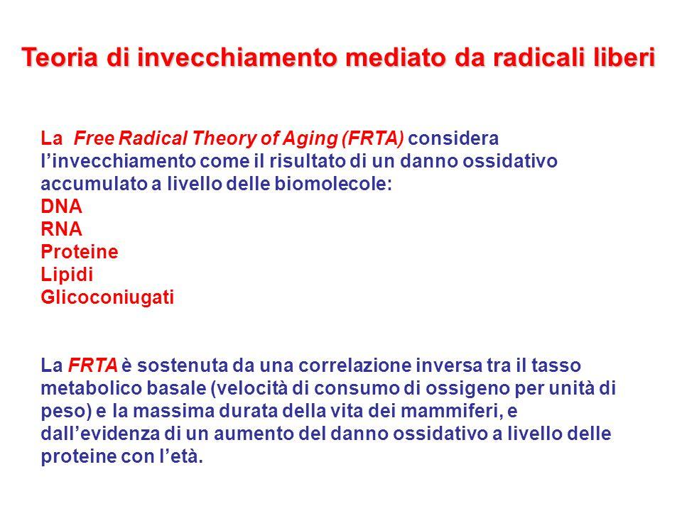 Teoria di invecchiamento mediato da radicali liberi La Free Radical Theory of Aging (FRTA) considera linvecchiamento come il risultato di un danno oss