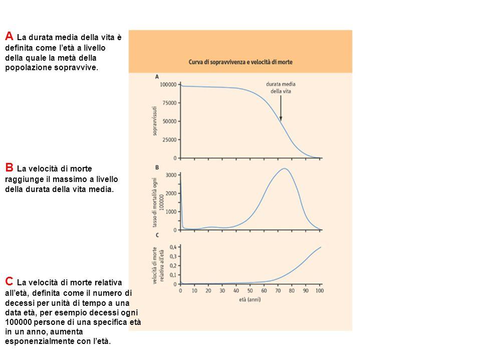 Le teorie dellinvecchiamento possono essere divise in due categorie generali: biologiche chimiche