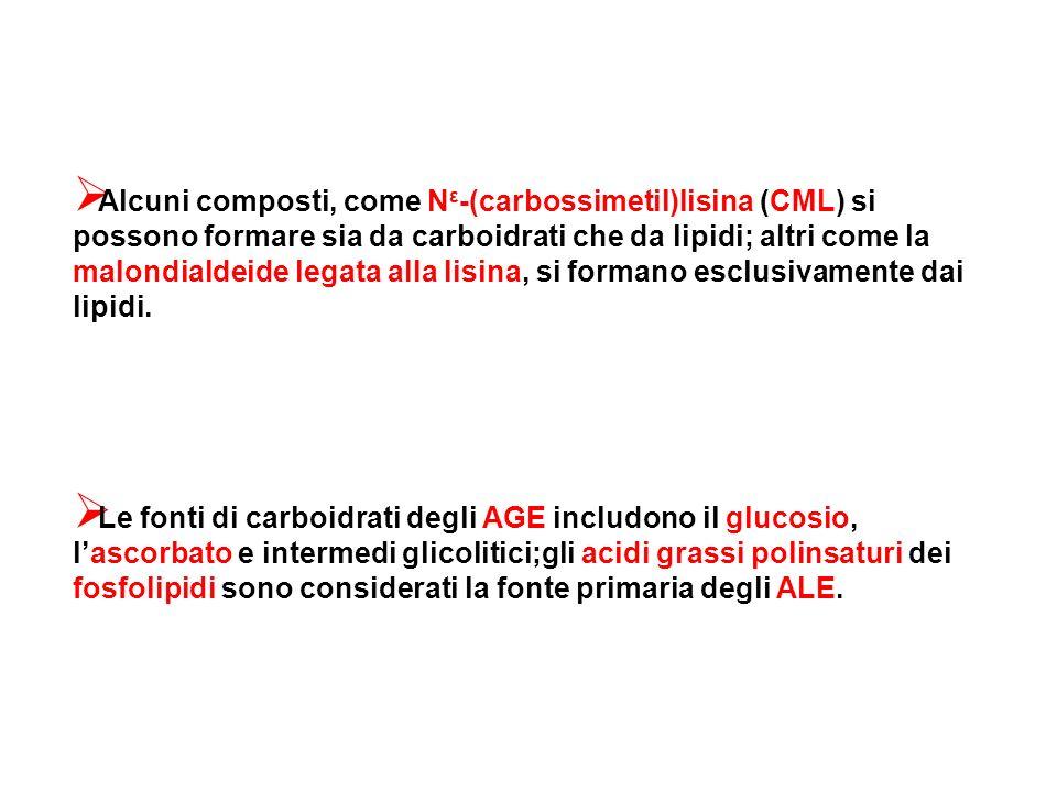 Alcuni composti, come N ε -(carbossimetil)lisina (CML) si possono formare sia da carboidrati che da lipidi; altri come la malondialdeide legata alla l