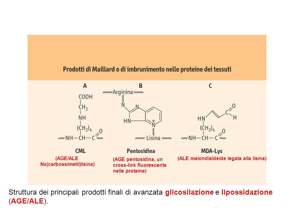 Struttura dei principali prodotti finali di avanzata glicosilazione e lipossidazione (AGE/ALE). (AGE/ALE Nε(carbossimetil)lisina) (ALE malondialdeide