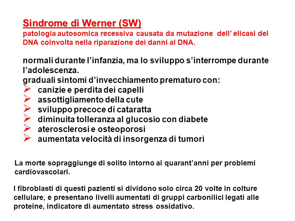 Sindrome di Werner (SW) patologia autosomica recessiva causata da mutazione dell elicasi del DNA coinvolta nella riparazione dei danni al DNA. normali