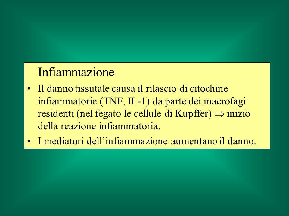 Infiammazione Il danno tissutale causa il rilascio di citochine infiammatorie (TNF, IL-1) da parte dei macrofagi residenti (nel fegato le cellule di Kupffer) inizio della reazione infiammatoria.