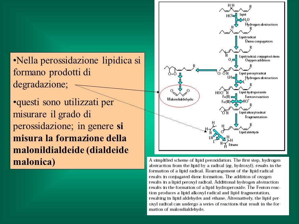 Nella perossidazione lipidica si formano prodotti di degradazione; questi sono utilizzati per misurare il grado di perossidazione; in genere si misura la formazione della malonildialdeide (dialdeide malonica)