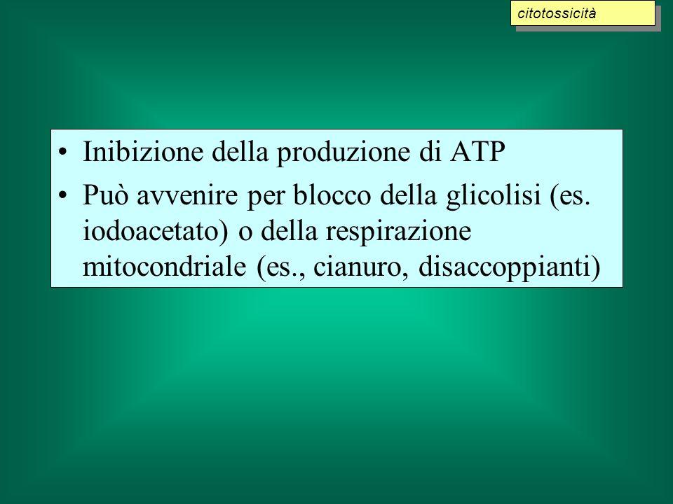 Inibizione della produzione di ATP Può avvenire per blocco della glicolisi (es. iodoacetato) o della respirazione mitocondriale (es., cianuro, disacco