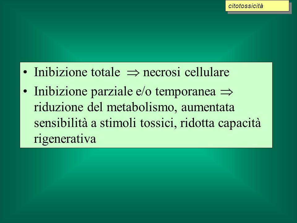 Inibizione totale necrosi cellulare Inibizione parziale e/o temporanea riduzione del metabolismo, aumentata sensibilità a stimoli tossici, ridotta capacità rigenerativa citotossicità