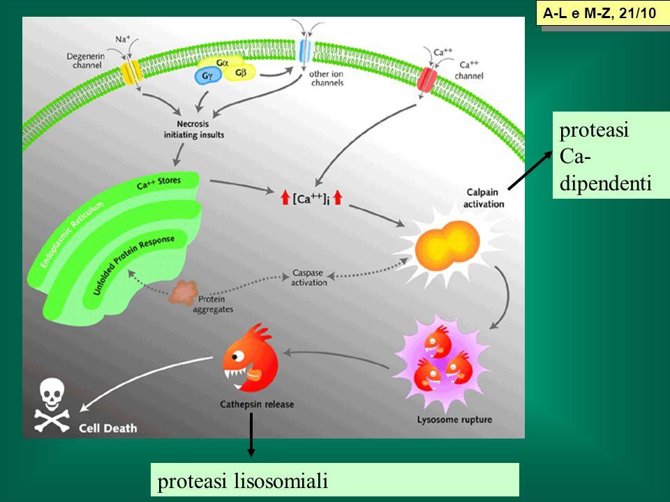 proteasi Ca- dipendenti proteasi lisosomiali A-L e M-Z, 21/10