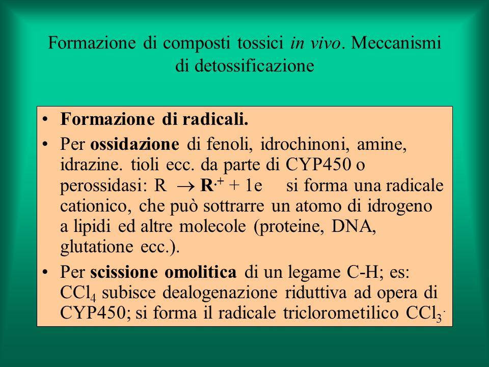 Formazione di composti tossici in vivo. Meccanismi di detossificazione Formazione di radicali. Per ossidazione di fenoli, idrochinoni, amine, idrazine