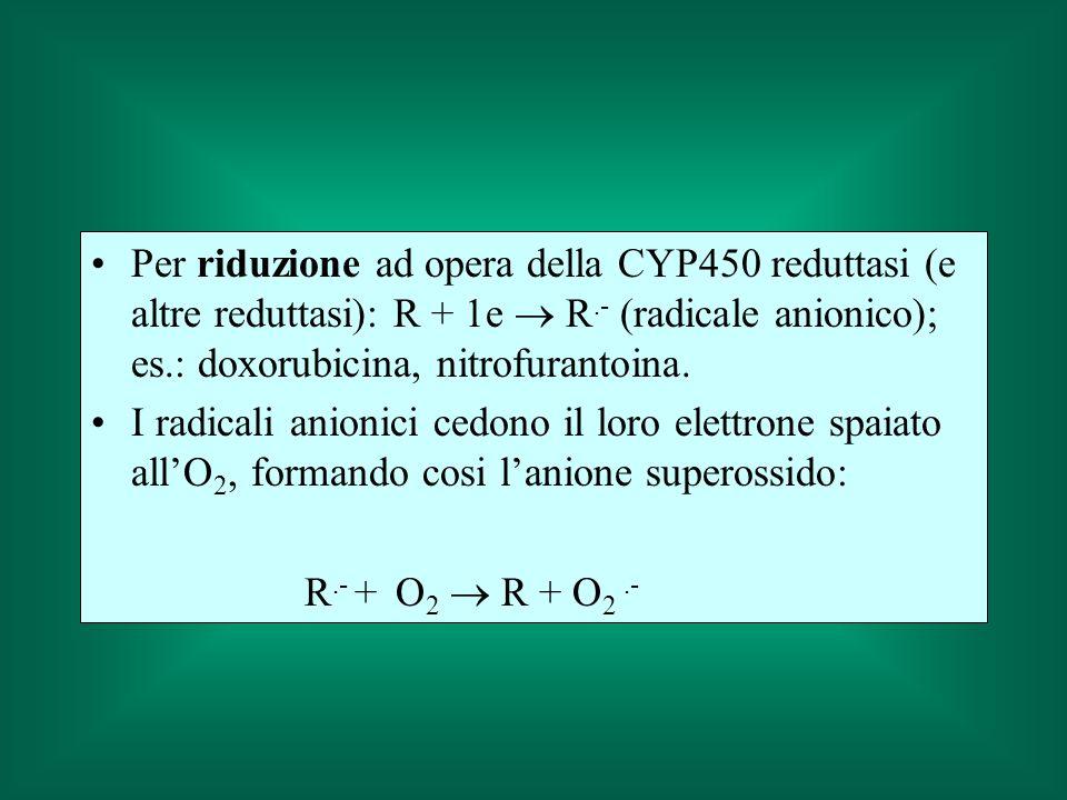 Per riduzione ad opera della CYP450 reduttasi (e altre reduttasi): R + 1e R.- (radicale anionico); es.: doxorubicina, nitrofurantoina. I radicali anio