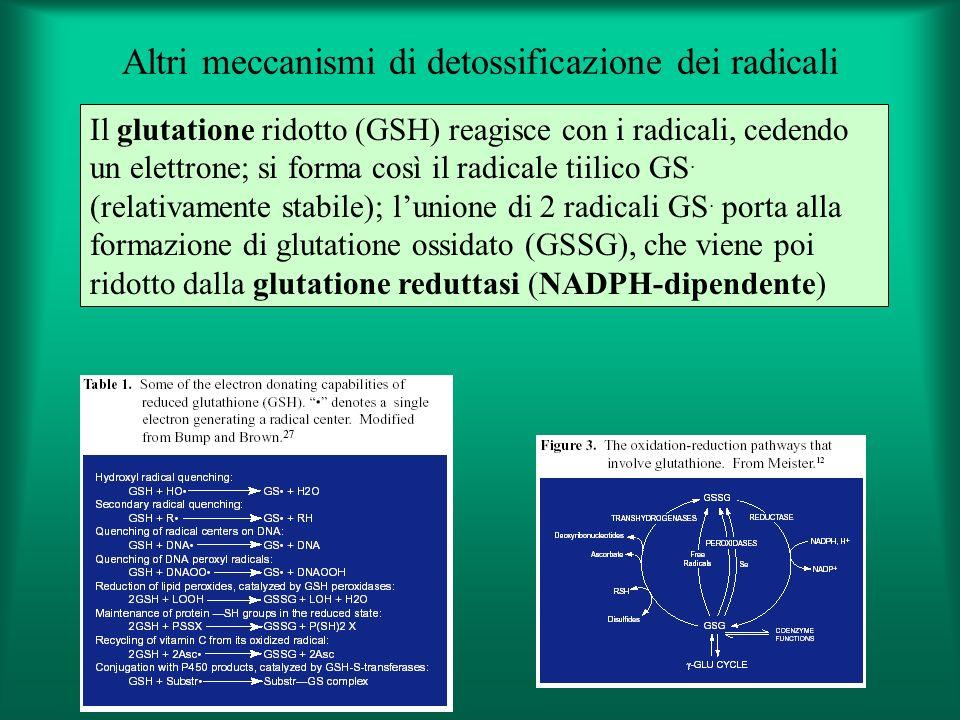 Altri meccanismi di detossificazione dei radicali Il glutatione ridotto (GSH) reagisce con i radicali, cedendo un elettrone; si forma così il radicale tiilico GS.