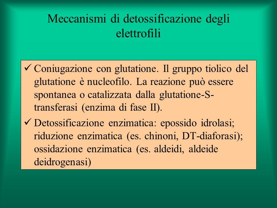 Meccanismi di detossificazione degli elettrofili Coniugazione con glutatione. Il gruppo tiolico del glutatione è nucleofilo. La reazione può essere sp