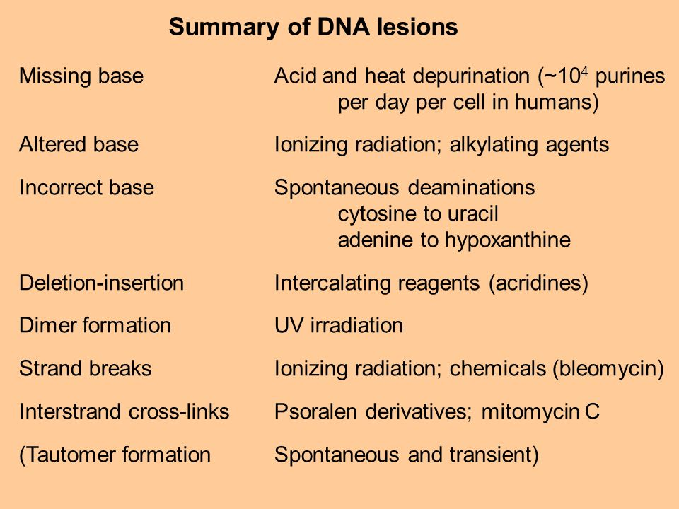 Summary of DNA lesions Missing baseAcid and heat depurination (~10 4 purines per day per cell in humans) Altered baseIonizing radiation; alkylating ag