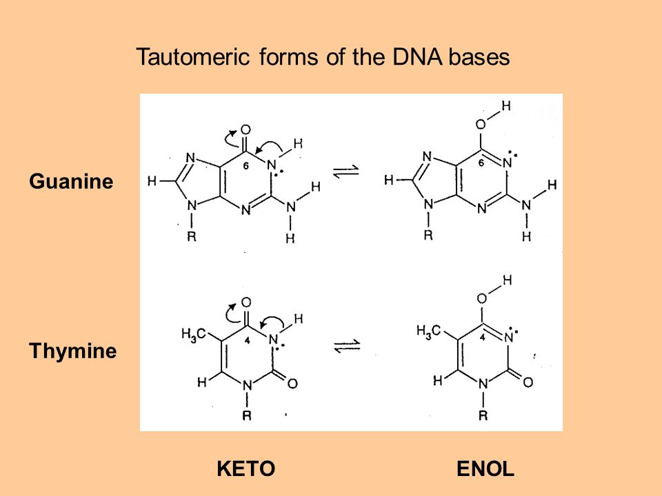 Guanine Thymine KETOENOL Tautomeric forms of the DNA bases