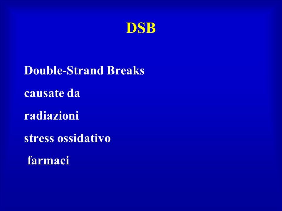 DSB Double-Strand Breaks causate da radiazioni stress ossidativo farmaci