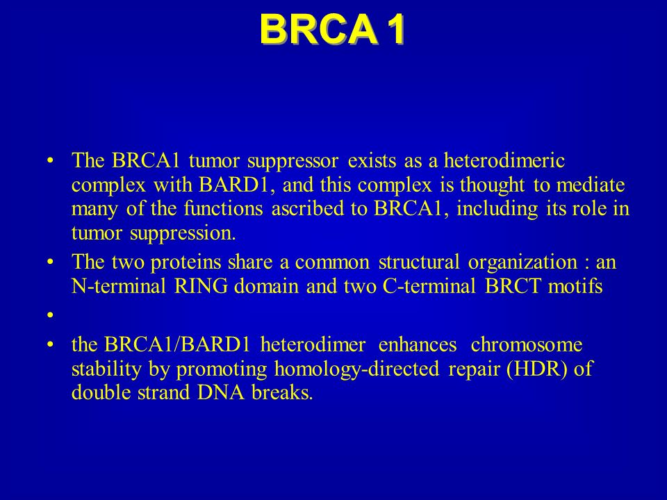 The BRCA1 tumor suppressor exists as a heterodimeric complex with BARD1, and this complex is thought to mediate many of the functions ascribed to BRCA