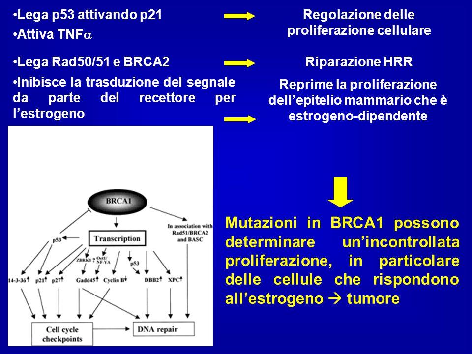 Inibisce la trasduzione del segnale da parte del recettore per lestrogeno Lega Rad50/51 e BRCA2Riparazione HRR Reprime la proliferazione dellepitelio