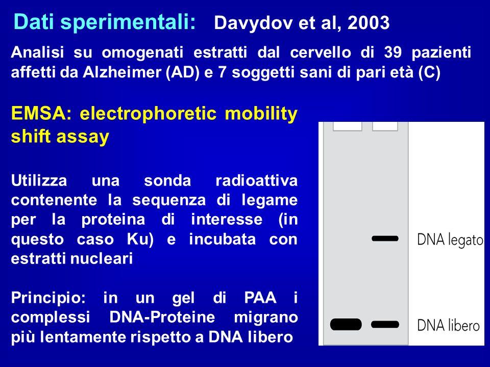 Dati sperimentali: Davydov et al, 2003 Analisi su omogenati estratti dal cervello di 39 pazienti affetti da Alzheimer (AD) e 7 soggetti sani di pari e