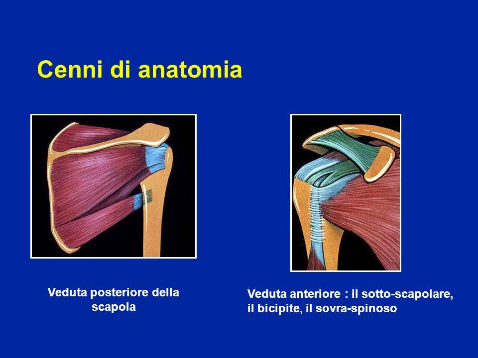 Cenni di anatomia Veduta posteriore della scapola Veduta anteriore : il sotto-scapolare, il bicipite, il sovra-spinoso