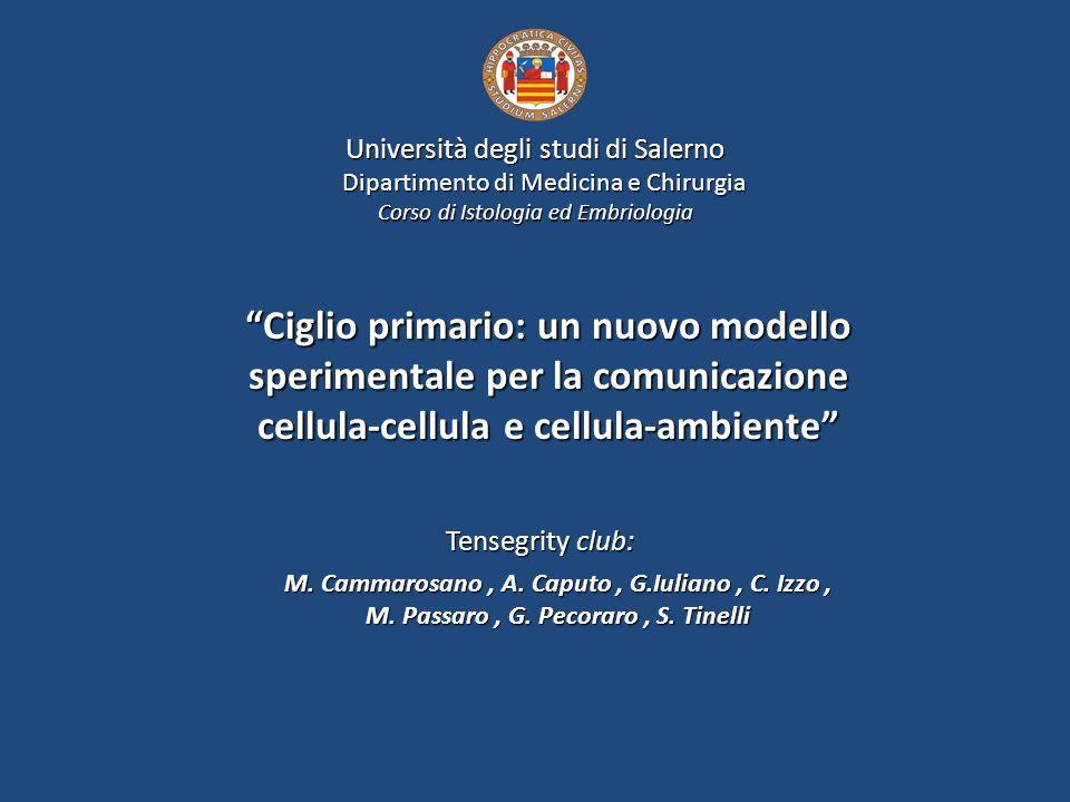 Ciglio primario: un nuovo modello sperimentale per la comunicazione cellula-cellula e cellula-ambiente M. Cammarosano, A. Caputo, G.Iuliano, C. Izzo,
