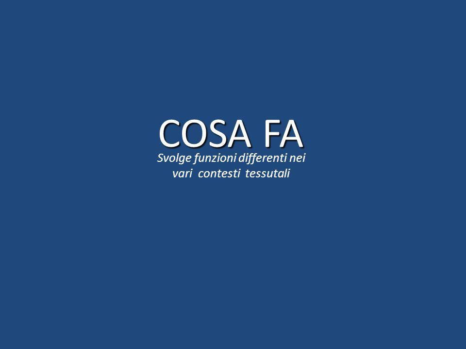 COSA FA Svolge funzioni differenti nei vari contesti tessutali