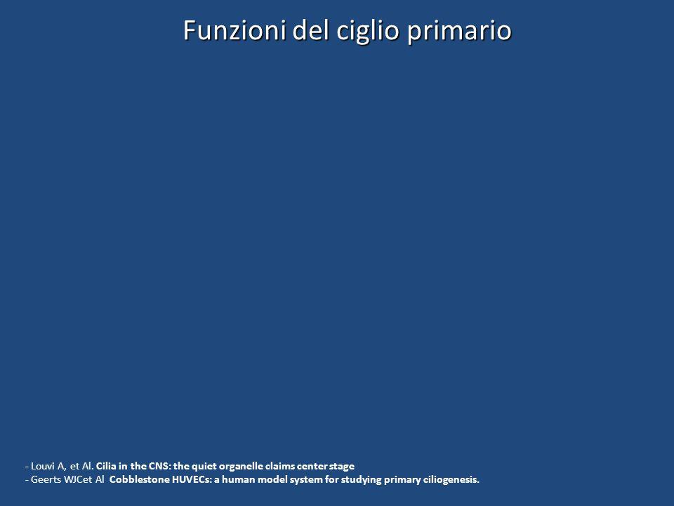 Funzioni del ciglio primario - Louvi A, et Al. Cilia in the CNS: the quiet organelle claims center stage - Geerts WJCet Al Cobblestone HUVECs: a human