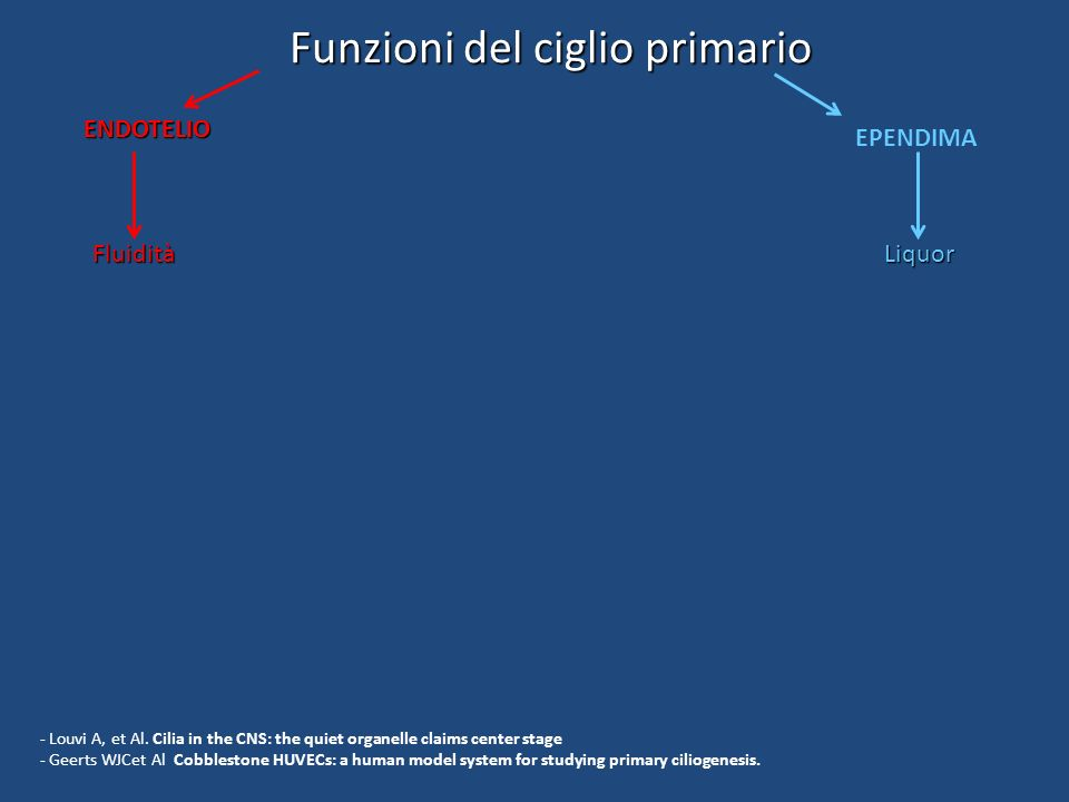 Funzioni del ciglio primario ENDOTELIO Fluidità STAMINALI Migrazione e differenziamento EPENDIMA Liquor LEUCOCITI Risposta immune - Louvi A, et Al.
