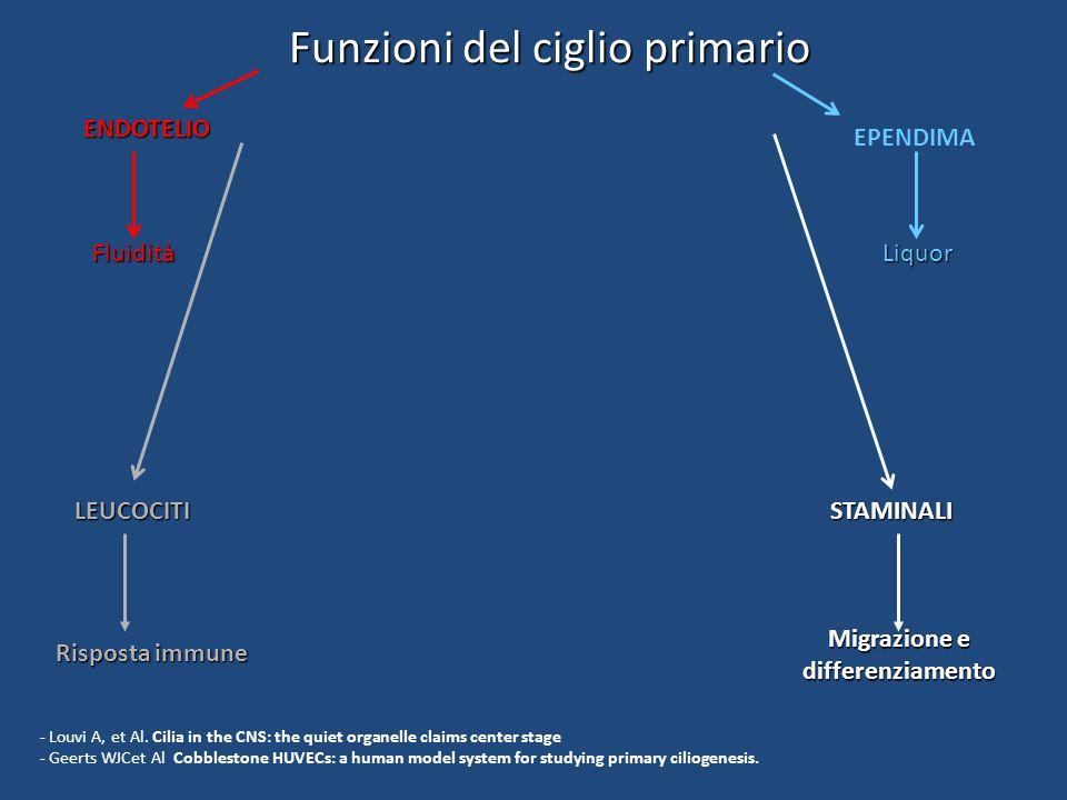 Funzioni del ciglio primario ENDOTELIO Fluidità STAMINALI Migrazione e differenziamento LOCOMOTORE MASSA OSSEA MATRICE CARTILAGINEA EPENDIMA Liquor LEUCOCITI Risposta immune - Louvi A, et Al.