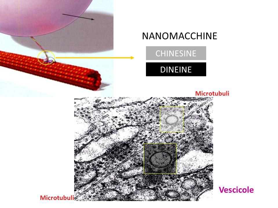 NANOMACCHINE CHINESINE DINEINE Microtubuli Vescicole