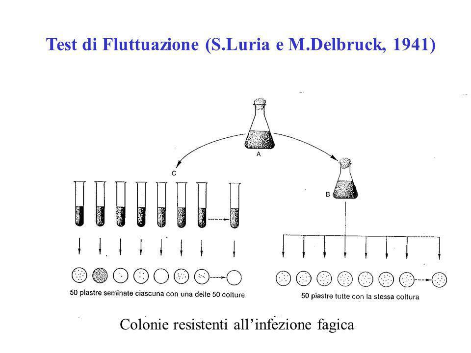 Esperimento del Replica- plating (J.e E.
